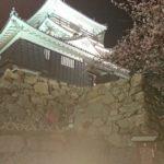 出世の街浜松にあるお城。浜松城(夜桜ライトアップ有り)