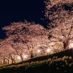 【磐田市】獅子ヶ鼻公園 桜まつり