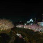 【掛川城】掛川桜まつり 夜桜ライトアップがとってもキレイ!