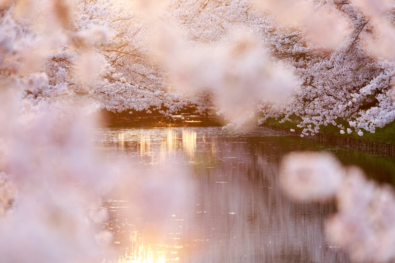 【秋葉ダム】に映る桜模様。ライトアップ7日まで!