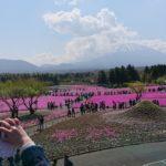 【富士市】芝桜まつり 今が見頃!5/26(日)まで。