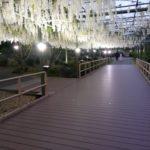 【はままつフラワーパーク】藤の花のライトアップいってきたよ
