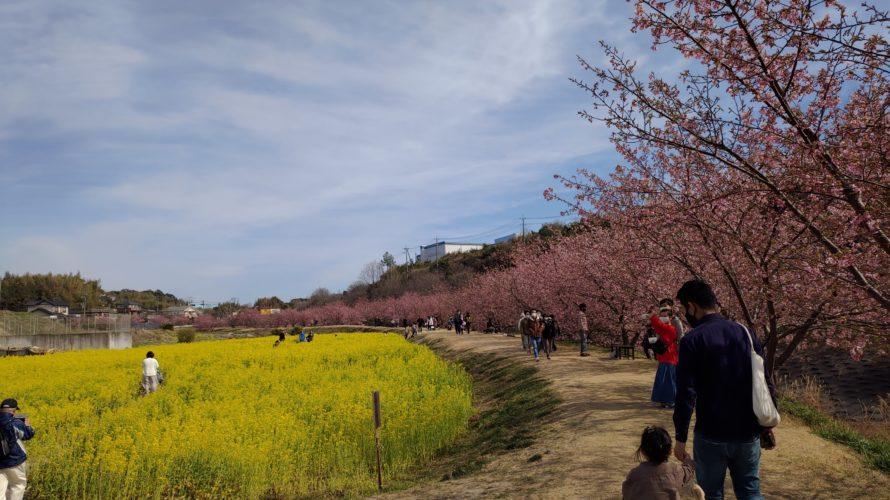【浜松市】東大山の河津桜見てきましたー!